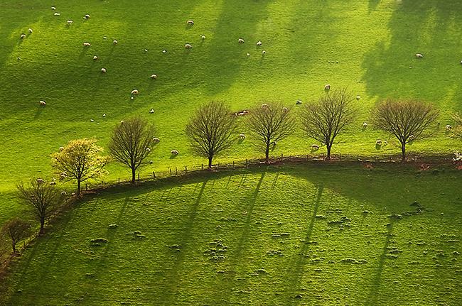 Epynt Trees_Brecon Beacons_Landscape_Nigel Forster_091112017