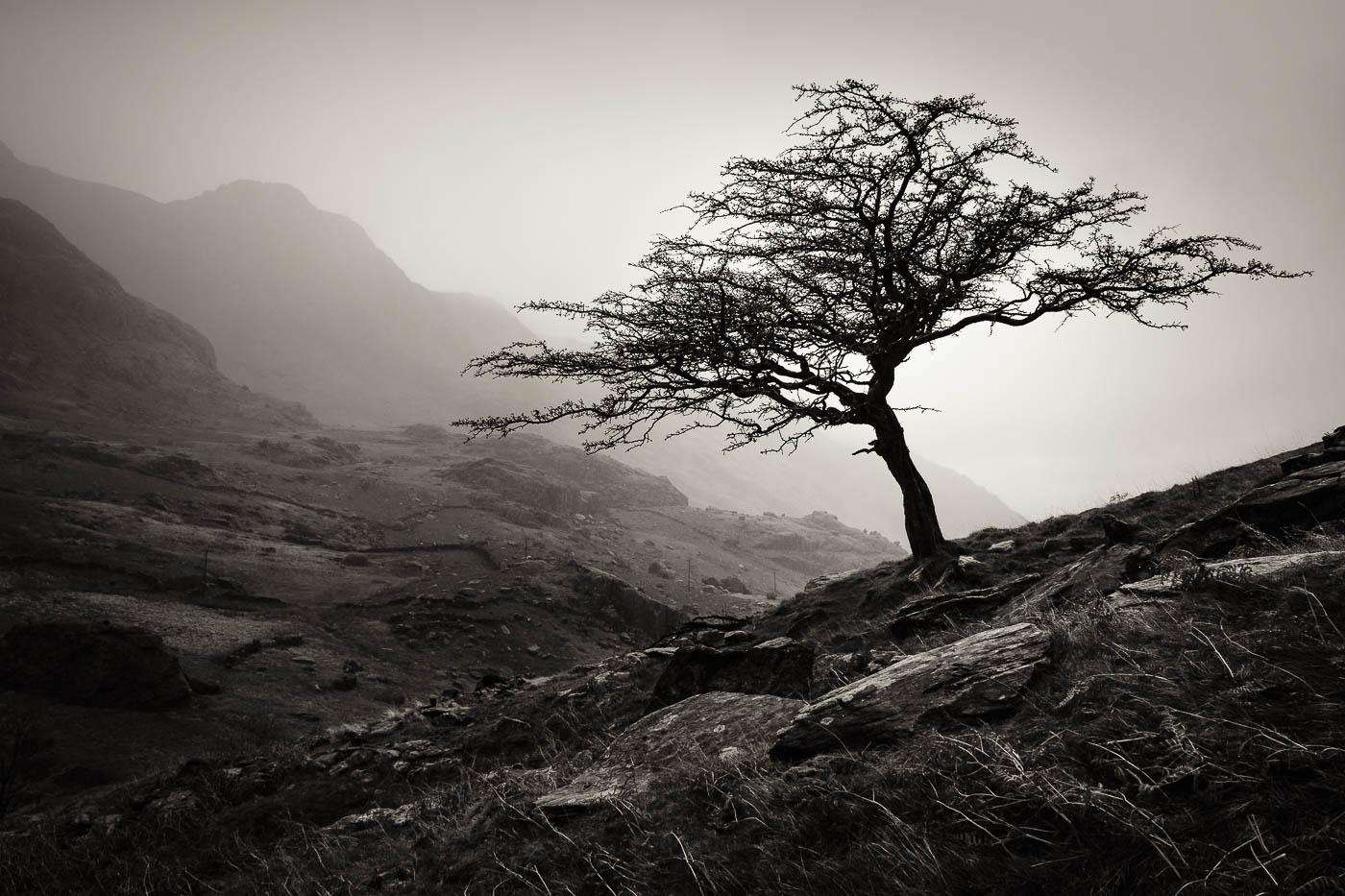 Tree on Llanberis Pass by Graeme Tozer.. Photography Workshop with Nigel Forster Photography